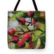 Fruit Of The Wild Rose Tote Bag