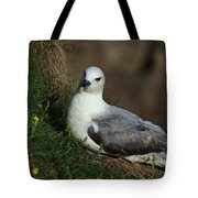 Fulmar Nesting On Cliff Tote Bag