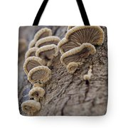 Fungui Growing On A Tree Trunk Tote Bag