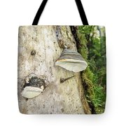 Fungus Grows On A Tree Trunk Tote Bag