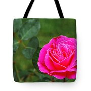 Fuschia Rose Tote Bag