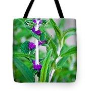 Salvia At Pilgrim Place In Claremont-california  Tote Bag