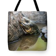 Galapagos Giant Tortoise In Pond Amongst Others Tote Bag
