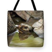 Galapagos Giant Tortoise In Pond Behind Another Tote Bag