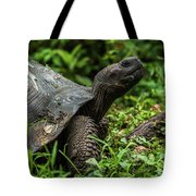 Galapagos Giant Tortoise In Profile In Woods Tote Bag