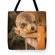Galapagos Sea Lion Sleeping On Wooden Bench Tote Bag