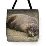 Galapagos Sea Lion Sleeps On Sandy Beach Tote Bag