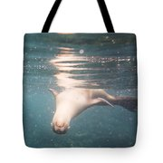 Galapagos Sealion Tote Bag