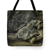 Galapagos Tortoise_hdr Tote Bag