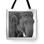 Gallery Image - Animals Tote Bag by Richard Reeve