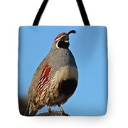Gambel's Quail On Sunny Perch Tote Bag