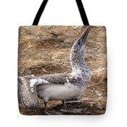 Gannet Chick 1 Tote Bag