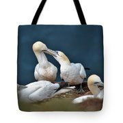 Gannet Feeding Young Tote Bag
