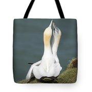Gannet - Morus Bassanus Tote Bag