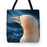 Gannet Swim 3 Tote Bag