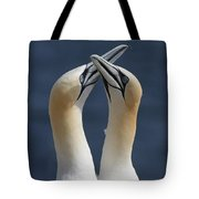 Gannets In Love Tote Bag