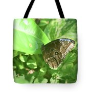 Garden With A Blue Morpho Butterfly With Wings Closed Tote Bag