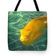 Garibali 2 Tote Bag