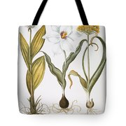 Garlic, 1613 Tote Bag