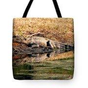 Gator 5 Tote Bag