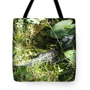 Gator Baby Tote Bag