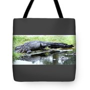 Gator On The Shore Tote Bag
