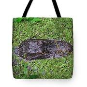 Gator Rising Tote Bag