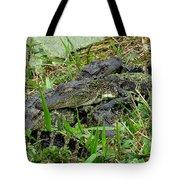 Gators 11 Tote Bag