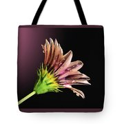 Gazania On Dark Background 2 Tote Bag