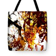Gazing Into The Autumn Trees Tote Bag