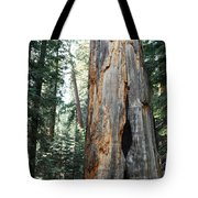 General Grant Grove Sequoia Tote Bag
