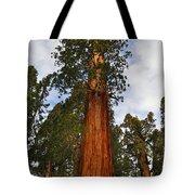 General Sherman Tree Tote Bag