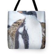 Gentoo Penguin With Turned Head On Snow Tote Bag