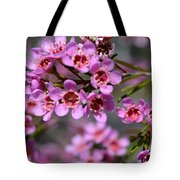 Geraldton Wax Flowers, Cwa Pink - Australian Native Flower Tote Bag