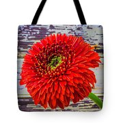 Gerbera Daisy Against Old Wall Tote Bag