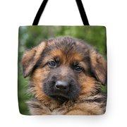 German Shepherd Puppy II Tote Bag
