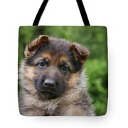 German Shepherd Puppy IIi Tote Bag by Sandy Keeton