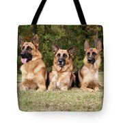 German Shepherds - Family Portrait Tote Bag