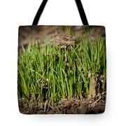Germination Tote Bag