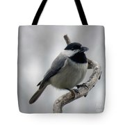 Getting Ready To Crack - Black-capped Chickadee Tote Bag