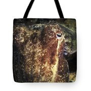 Giant Cuttlefish Camouflage Tote Bag
