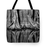 Giant Cypress Tree Trunk And Reflection 2 Tote Bag