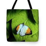 Giant Orange Tip Butterfly Tote Bag