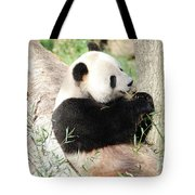 Giant Panda Bear Leaning Against A Tree Trunk Eating Bamboo Tote Bag