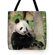 Giant Panda Bear Lounging On Against Tree Trunk Tote Bag