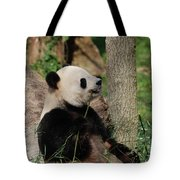 Giant Panda Bear Sitting Up Leaning Against A Tree Tote Bag