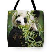 Giant Panda Eating Bamboo Tote Bag