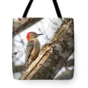 Giant Red Headed Woodpecker  Tote Bag