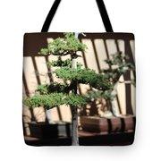 Giant Redwood Bonsai  Tote Bag