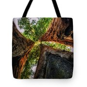 Giant Sequoia Sunset Tote Bag